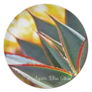 Succulent plant dinner plate: Agave 'Blue Glow' Plate