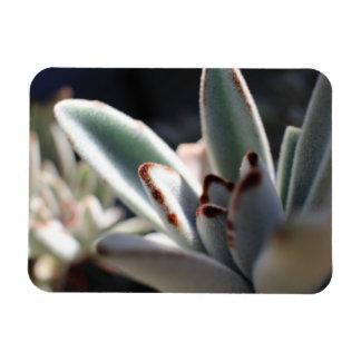 Succulent Plant Flexible Photo Magnet