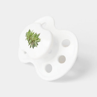 succulent plant in the garden pacifier