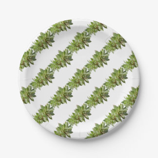 succulent plant in the garden paper plate