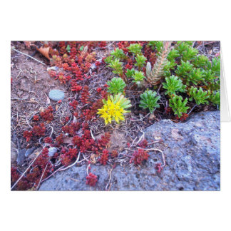 Succulent Plants and Rocks Greeting Card