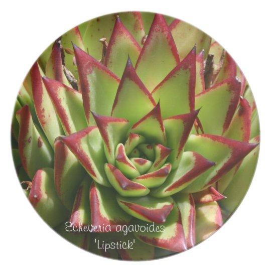 Succulent plate: Echeveria agavoides 'Lipstick' Plate