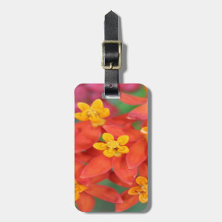 Succulent Red and Yellow Flower Echeveria Luggage Tag