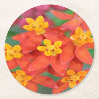 Succulent Red and Yellow Flower Echeveria Round Paper Coaster