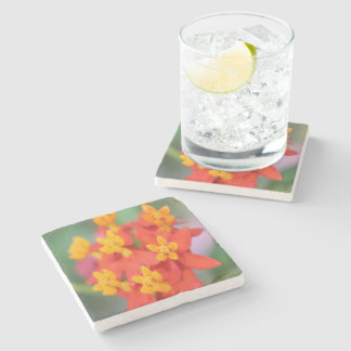 Succulent Red and Yellow Flower III Stone Coaster