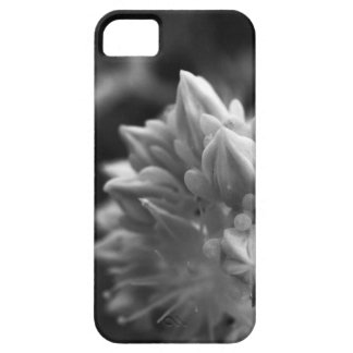 SucculentBouquet iPhone 5 Case