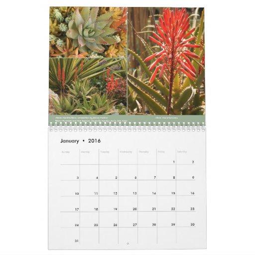 Succulents 2014 Calendar by Debra Lee Baldwin