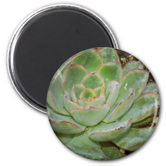 Succulents 2 Inch Round Magnet