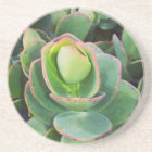 #succulents at the greenhouse. coaster