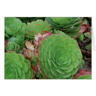 Succulents (Blank) Card