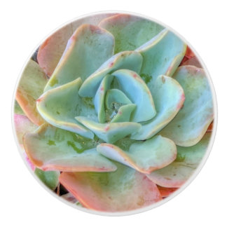 Succulents Ceramic Knob