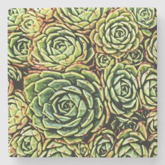 Succulents Coaster