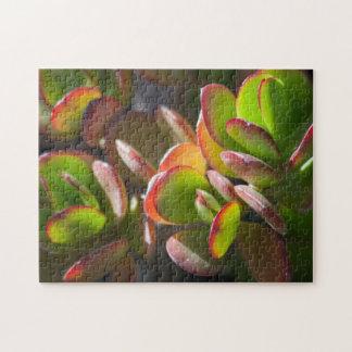 Succulents Puzzle