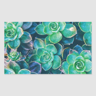 Succulents, Succulent, Cactus, Cacti, Green, Plant