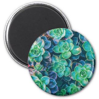 Succulents, Succulent, Cactus, Cacti, Green, Plant 2 Inch Round Magnet
