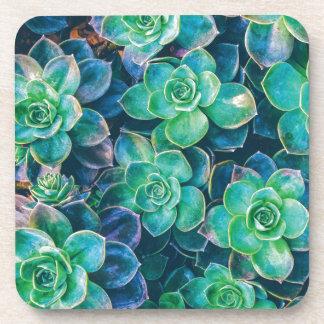 Succulents, Succulent, Cactus, Cacti, Green, Plant Beverage Coaster