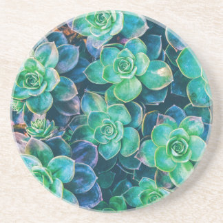 Succulents, Succulent, Cactus, Cacti, Green, Plant Drink Coasters