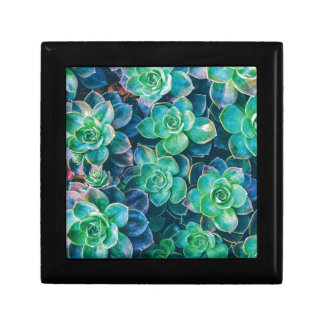 Succulents, Succulent, Cactus, Cacti, Green, Plant Gift Box