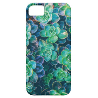 Succulents, Succulent, Cactus, Cacti, Green, Plant iPhone 5 Cases