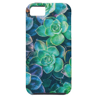 Succulents, Succulent, Cactus, Cacti, Green, Plant iPhone 5 Cover