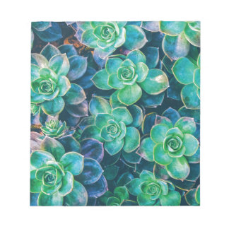 Succulents, Succulent, Cactus, Cacti, Green, Plant Notepad