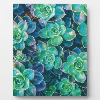Succulents, Succulent, Cactus, Cacti, Green, Plant Plaque