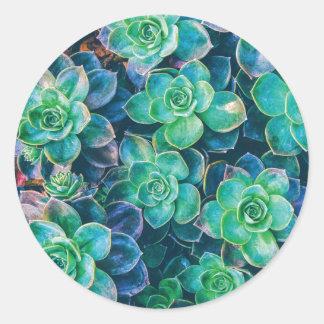 Succulents, Succulent, Cactus, Cacti, Green, Plant Round Sticker