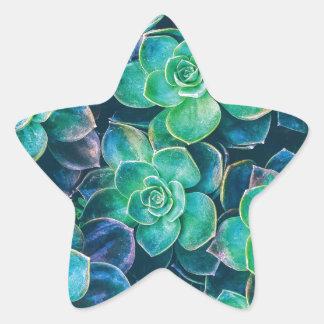 Succulents, Succulent, Cactus, Cacti, Green, Plant Star Sticker