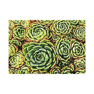 Succulents Wrapped Canvas