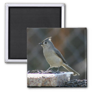 Suet Supper Magnet