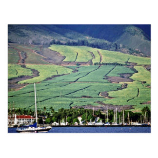 Sugar Cane Fields - Lahaina, Maui Postcard