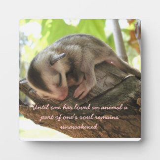 sugar glider baby plaque