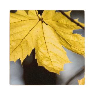 Sugar maple, fall maple wood coaster