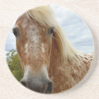 Sugar The Appaloosa Horse,_ Coaster