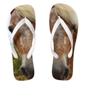 Sugar The Appaloosa Horse, Flip Flops