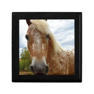 Sugar The Appaloosa Horse,_ Gift Box