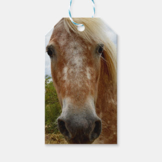 Sugar The Appaloosa Horse,_ Gift Tags