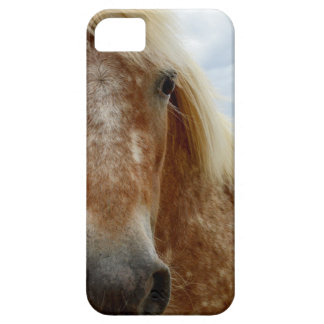 Sugar The Appaloosa Horse,_ iPhone 5 Cover