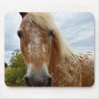 Sugar The Appaloosa Horse, Mousepad. Mouse Pad