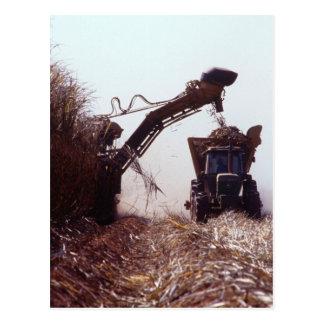 Sugarcane harvest postcard