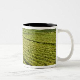 Sugarcane Plantations, Guyana Two-Tone Coffee Mug