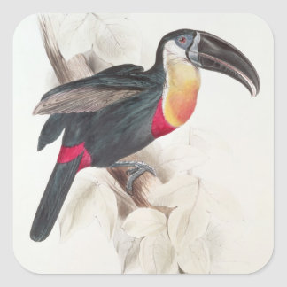 Sulphur and white breasted Toucan, 19th century Sticker