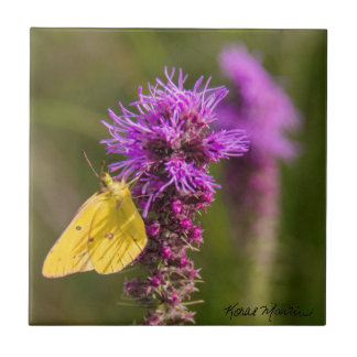 Sulphur Butterfly on Liatris Small Square Tile