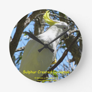 Sulphur Crested Cockatoo Wallclocks