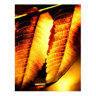 Sumac Leaves Postcard