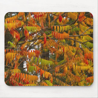 Sumac tree in autumn color in Whitefish, Mouse Pad