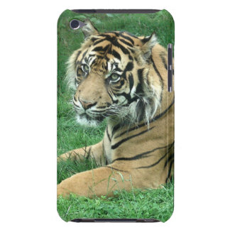 Sumatra Tiger On Your iPod Touch Case-Mate iPod Touch Cases