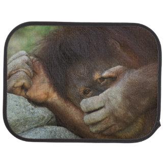 Sumatran Orangutan, Pongo pygmaeus Auto Mat