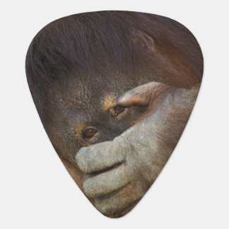 Sumatran Orangutan, Pongo pygmaeus Guitar Pick