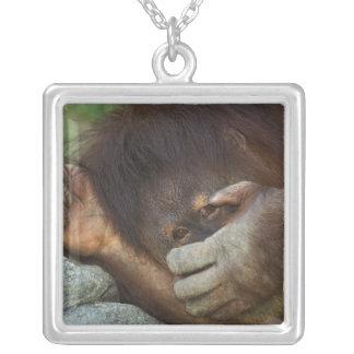 Sumatran Orangutan, Pongo pygmaeus Silver Plated Necklace